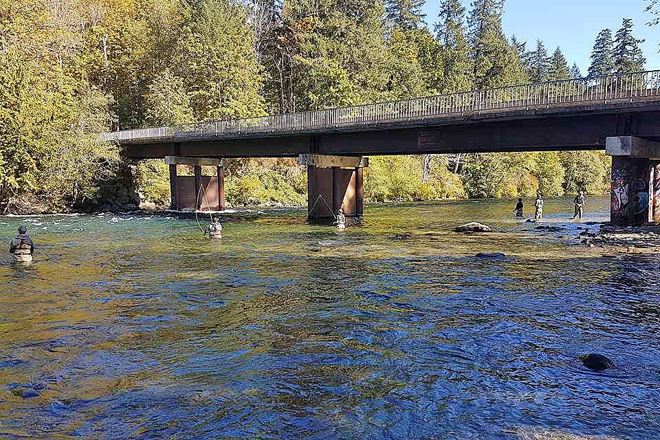 Campbell River pink salmon run five times that of last year